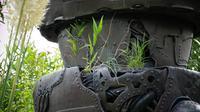 DSC05292 grass.JPG